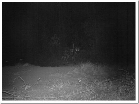 Lajuma wild dogs 13.6.12 Sam Williams IMG_0772